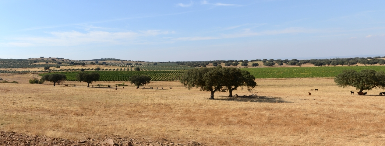 photo-1-alentejo_september_2013-1-fileminimizer
