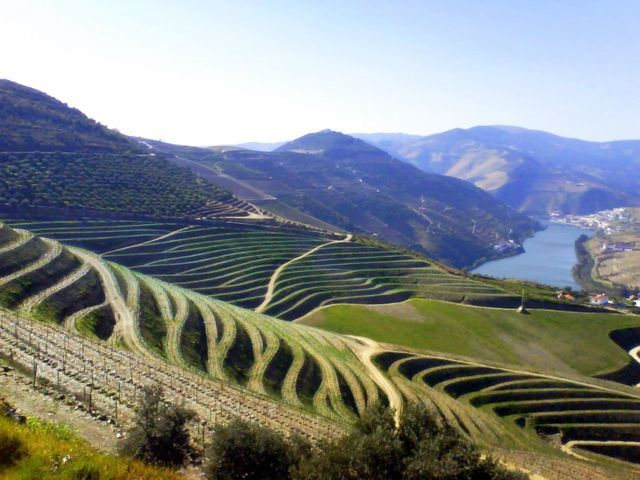 photo-3-oporto_terraced_vineyards-fileminimizer